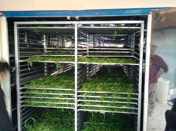 فروش دستگاه خشک کن سبزیجات کابینی